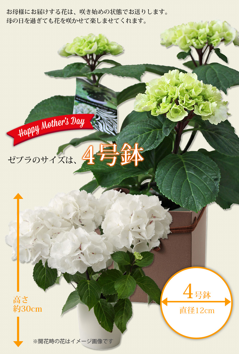 花の大きさ