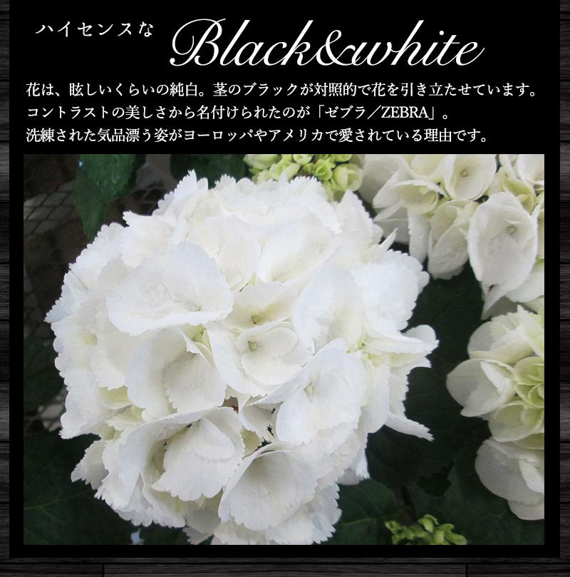 ハイセンスなブラック&ホワイト